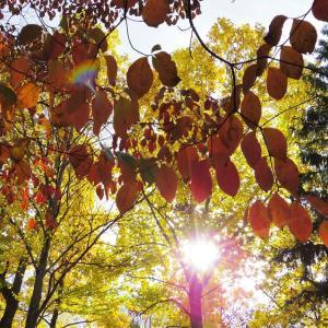 色とりどりの秋空。