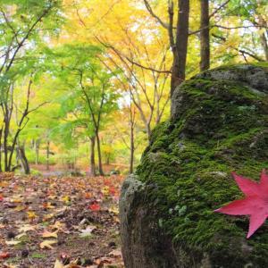 秋のたからさがし。