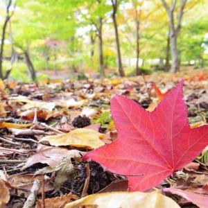 落ち葉のじゅうたんに。