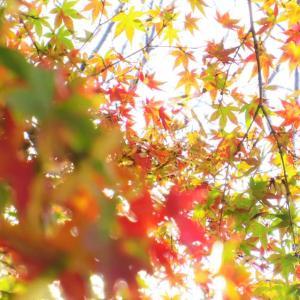 秋もよう。