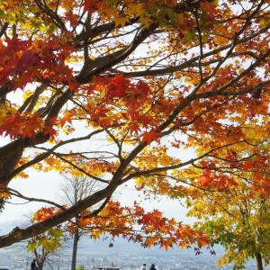 大きな楓の木のしたで。
