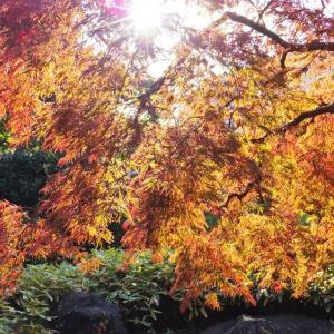 秋彩の午後。
