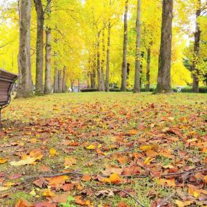 静寂の黄色い森。