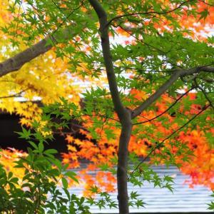 秋彩もよう。