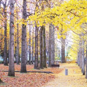 晩秋のさんぽ道。