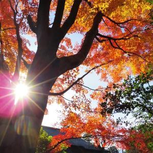 庭園の秋彩。