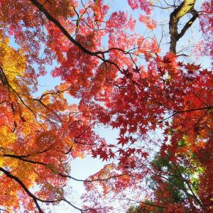 秋彩の空。