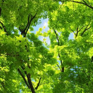 青楓の空。