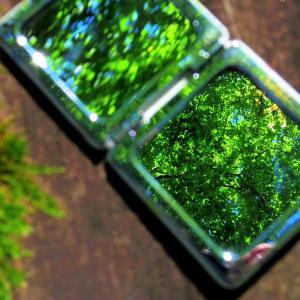 鏡のなかの小さな森。