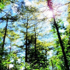 流れる森。