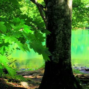 碧い水面、木々の囁き。
