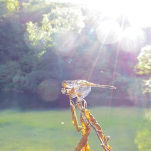 ひかりと蜻蛉と碧い水。