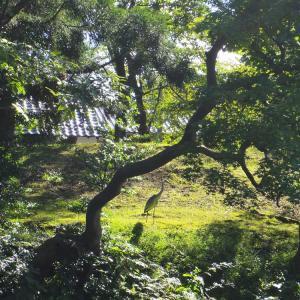 鷺のいる碧の風景。