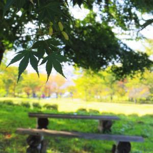 楓の森の時間。