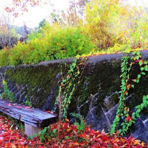 彩り落ち葉とベンチの秋。