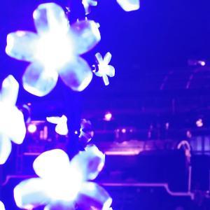 無限列車と藤の花。