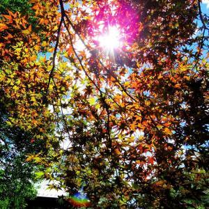 初秋の楓空。