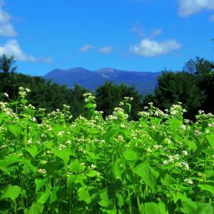 青天山脈、白い花。