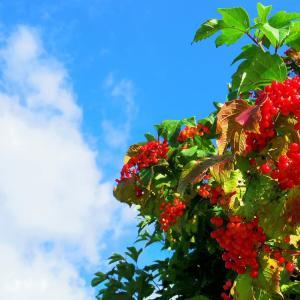 青空に赤い実。