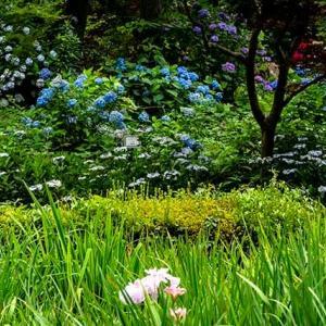 薬師池の林間の遊歩道