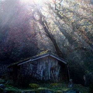 黒地の柿木と光芒