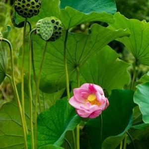花はめっきり少なくなった修景池