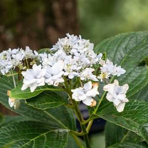 時季外れの花たち