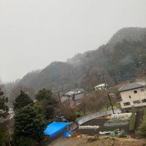 雪が降りだしました。