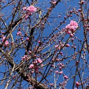 津久井の里山に春が!