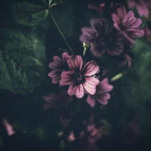 見ないようにしていた感情を大切にしたいと思った。自分の願いを叶えてあげる。