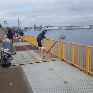 磯子海釣り施設 ウキフカセ釣り メジナ グレ