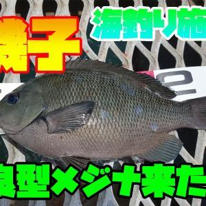 ウキフカセ釣り良型メジナGET!!!?(前編)