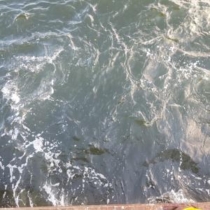 磯子海釣り施設 後編 ウキフカセ釣り
