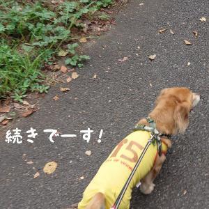公園散歩 3