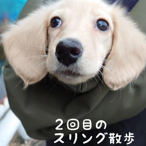 スリング散歩 2回目〜