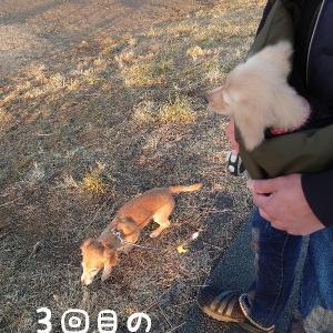 スリング散歩 3回目〜