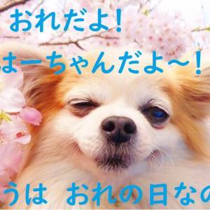 桜の日&お祝いのベランピング♪