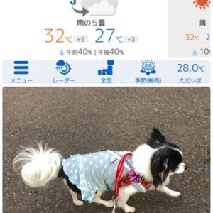ら~めんcafeと今日のお散歩