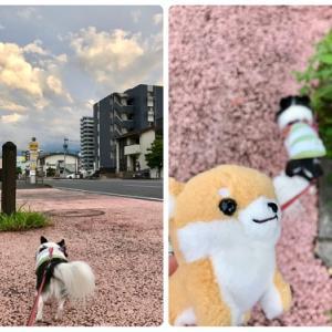 快適お散歩とジョーカーDay!