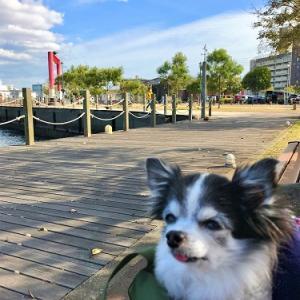 海辺の公園