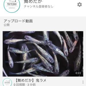YouTubeデビュー???