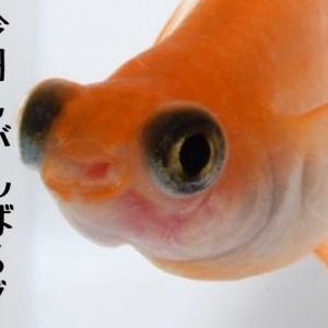 孵化した稚魚の餌☆
