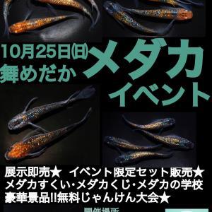 ☆10/25(日)舞めだかイベント☆