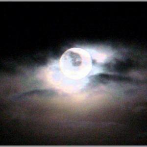 ベッリーニ*優雅な月よ
