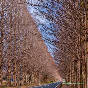 写真カルチャー・旅カル・奥琵琶湖冬景色バスツアー2020...