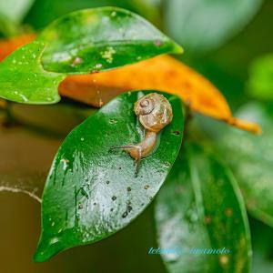 梅雨感。。。