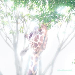 京都市動物園...