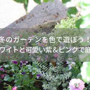 冬のガーデンを色で遊ぼう!大人なホワイトと可愛い紫&ピンクで庭づくり♪