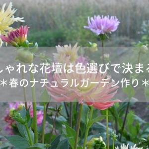 おしゃれな花壇は色選びで決まる!春のナチュラルガーデン作り