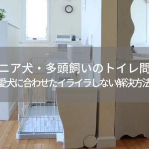 シニア犬・多頭飼いのトイレ問題*愛犬に合わせたイライラしない解決方法